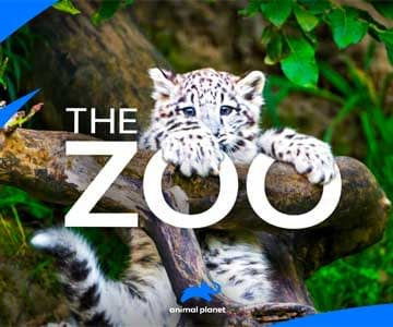 the-zoo-grid