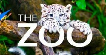 the-zoo-cover